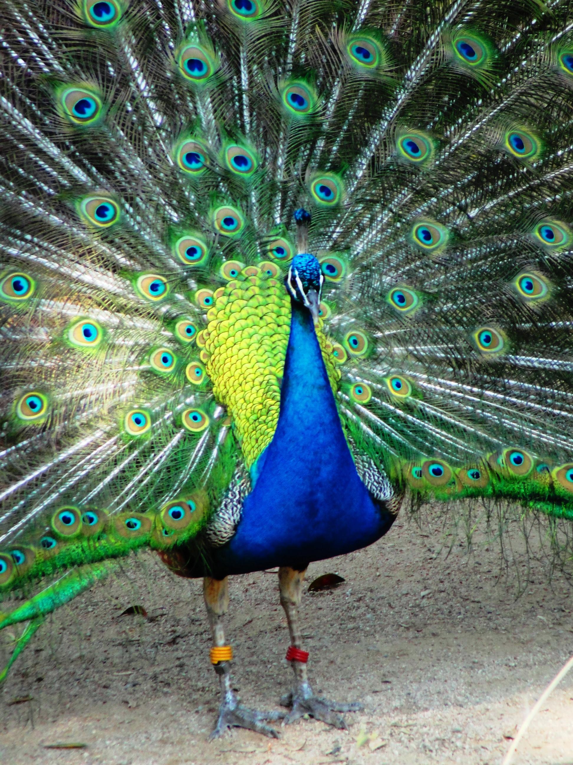 Colorful Birds   Braman's Wanderings