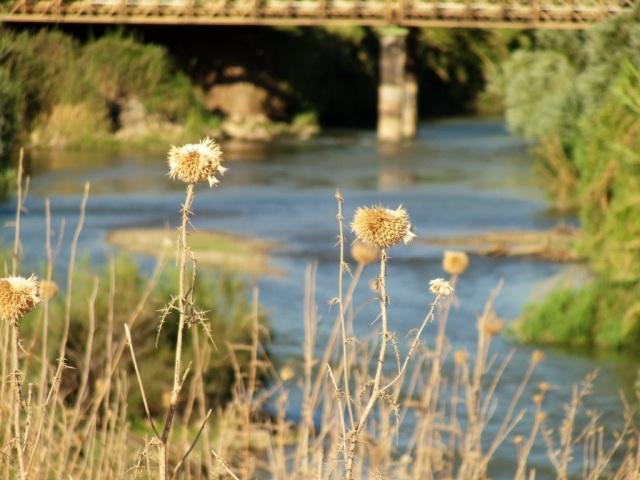 Jordan River north of the Sea of Galilee - Tiberias - Crossing Jordan - River Scene