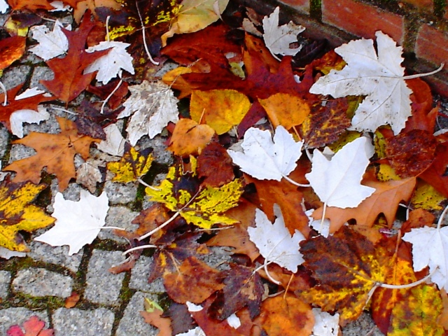 Picture of leaves on the sidewalk in Berlin - White leaves