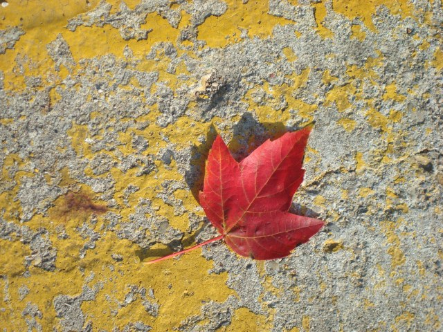 Red Leaf in Crawfordsville, Indiana