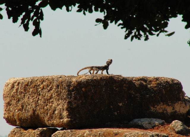 Hazor Lizard Stone Tel-Hazor