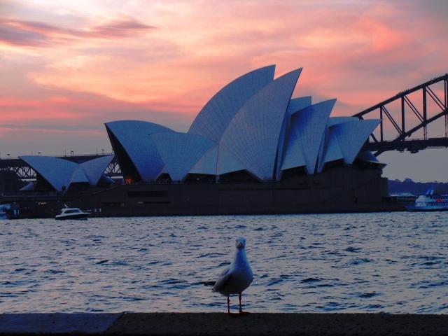 Sydney Opera House - Sunset in Sydney - Farm Cove - Sea Gull