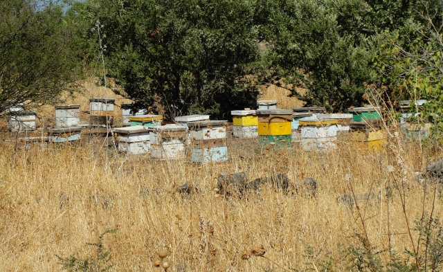 Flowing with Honey - Bee Hives in Israel - Bethsaida - Geshur