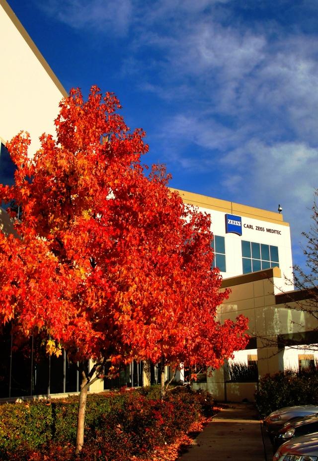 December Colors - Fall Foliage - Dublin, California - Zeiss