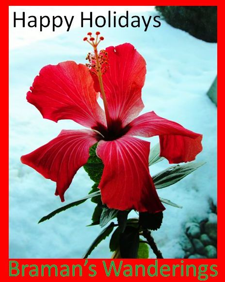 Happy Holidays from Braman's Wanderings - https://bramanswanderings.wordpress.com - Hibiscus - Snow - Canada