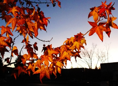 Orange Leaves - Sunset - Winter Day - Fall Foliage