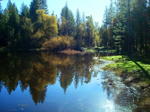 Pine Mountain Lake - Valley Pond - Serenity - Reflections - California Foothills