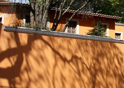 Tree shadows, Mexico, Coyoacan