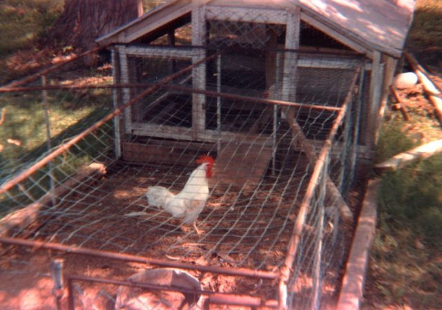 Chicken coop - Chicken Production - Egg Production - Small Town America