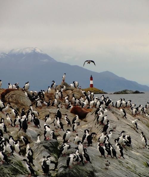 Sea Lions Island - Isla de los lobos - Sea Lions - Beagle Channel - Cormorant - Island
