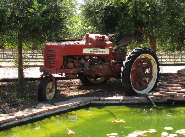 Old Tractor - Red Tractor - Farm Tractor - Gold Fish Pond - Peacock Farms - Koi Pond - Wedding