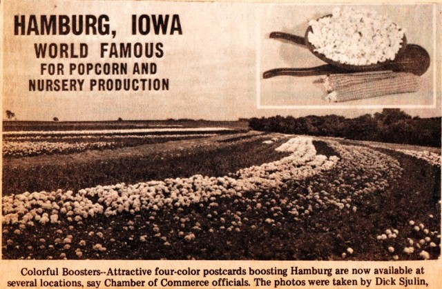 Hamburg, Iowa Post Card - World Famous for Popcorn and Nursery Production - Popcorn Day - Interstate Nurseries