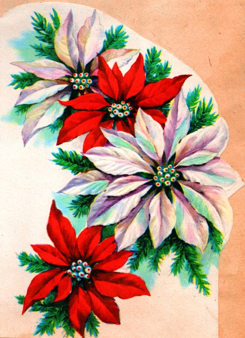 Red and White Flowers - Feast of St. Stephen - Good King Wenceslas
