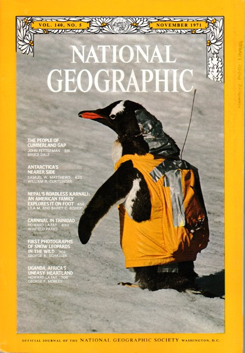 National Geographic - November 1971 - Gentoo Penguin - Antarctica's Nearer Side - Snow Leopards