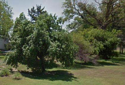 Trees - Crab Apple Trees - Large Trees