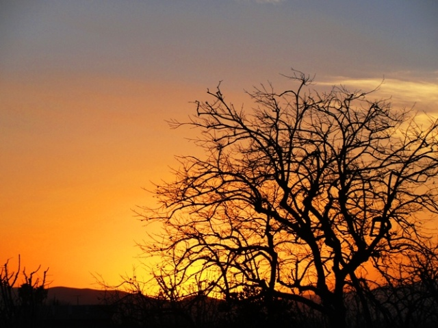 Sunset over the Central Valley California - Patterson - Silhouette - Tree - Golden Sunset