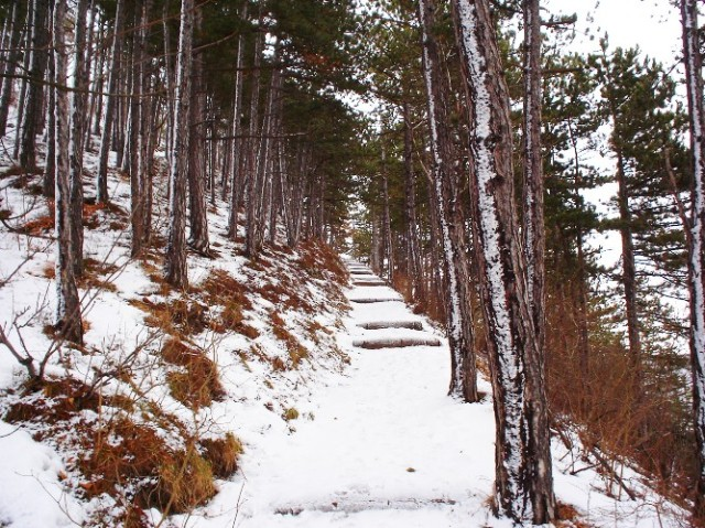 Jena, Germany - Walk in the Woods - Winter Walk - Snow Covered Trail - Hiking - Wanderweg