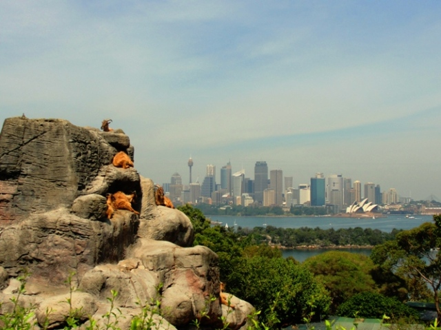 Taronga Zoo - Sydney Harbour - Sydney Australia - Opera House - Zoo with a View