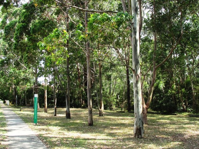 Summer in Australia - Summer Down Under - Australian Park