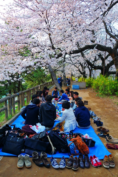 Cherry Blossoms - Japan - Traditions - Cherry Blossom Viewing - Tokyo
