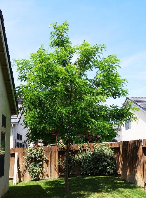 Backyard - Lawn - Tree - Flowers - Vines - Foliage - Sprinkler System