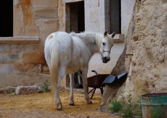 White Horse, Cave Hotel, Cappadocia, Turkey
