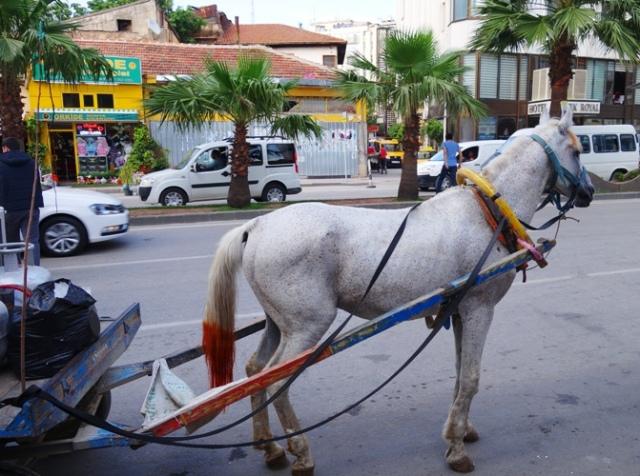 Turkey, Horse, Adana Turkey, Henna Dipped Tail, Cart Horse