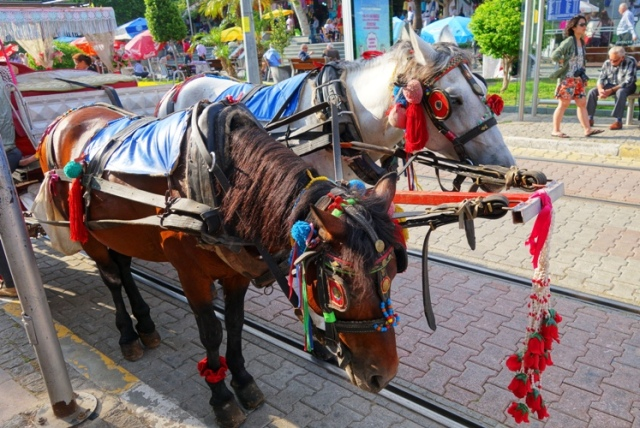 Carriage Horses, Antalya Turkey, Horse and Carriage, Carriage Ride