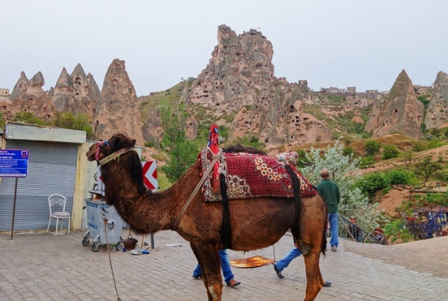 Camel - Rock Houses - Cappadocia