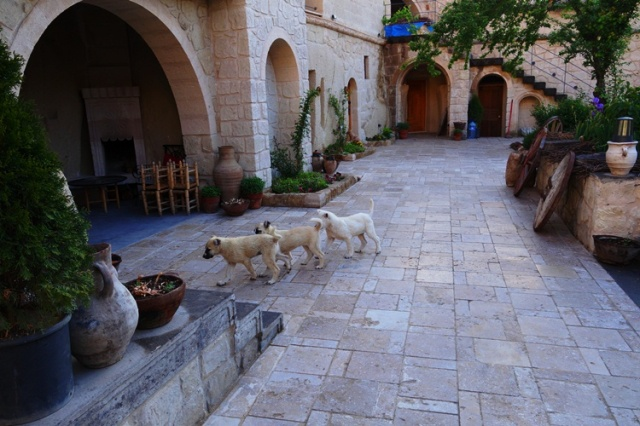 Cave Hotel - Cappadocia - Sheep Dogs - Puppies