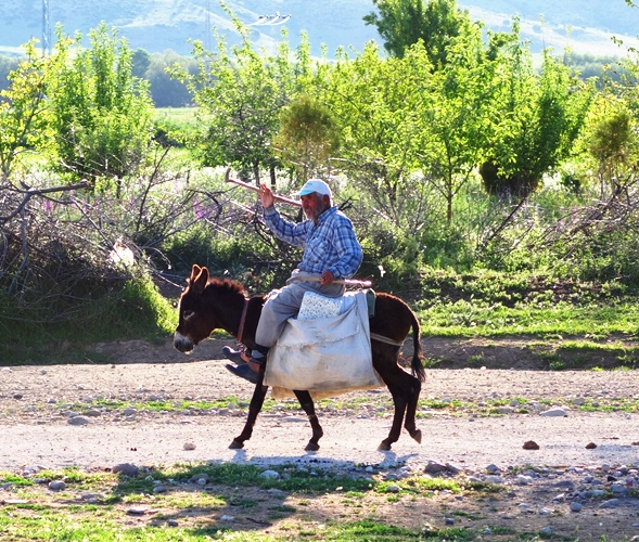 Turkish Man on Donkey - Cattle Herder - Lystra