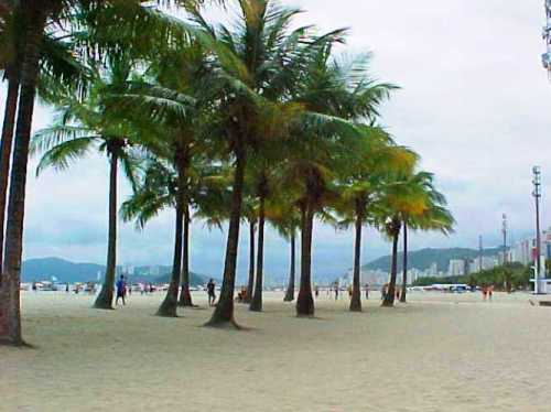 Santos Brazil, Beach in Brazil, Palm Trees, World Cup, Soccer