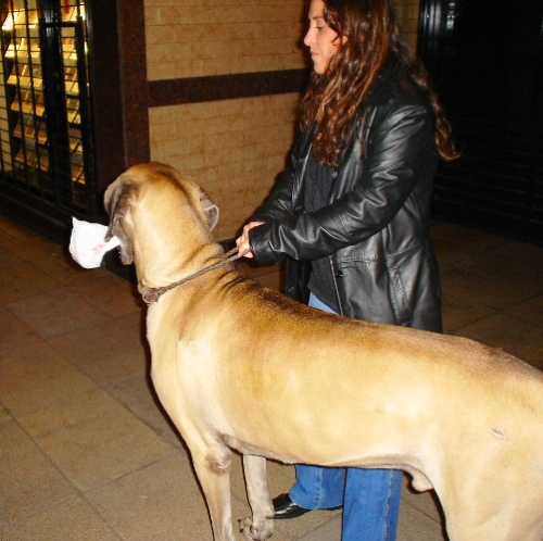 Great Dane, Buenos Aires, Argentina, Dogs in Argentina, Dog with Bone