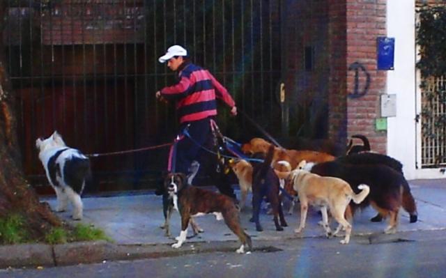 Dog Walker in Argentina, Buenos Aires, Dogs, Dog Walker