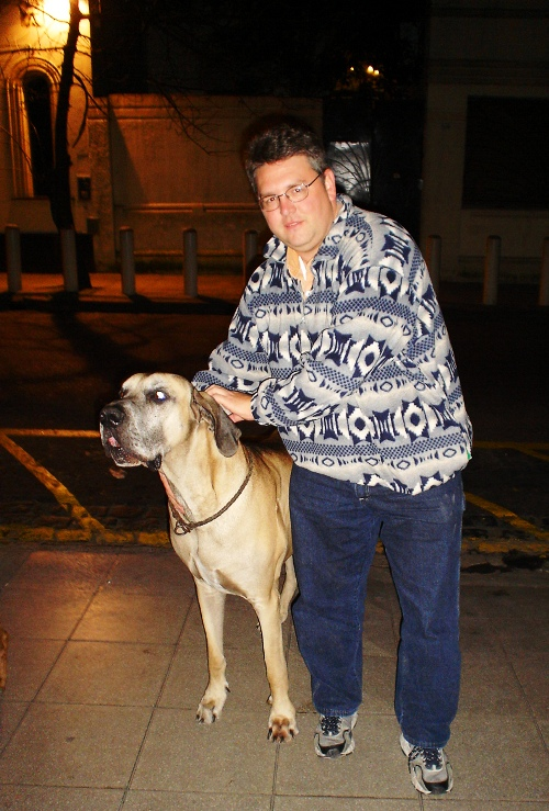 Great Dane, Large Dog, Buenos Aires, Argentina