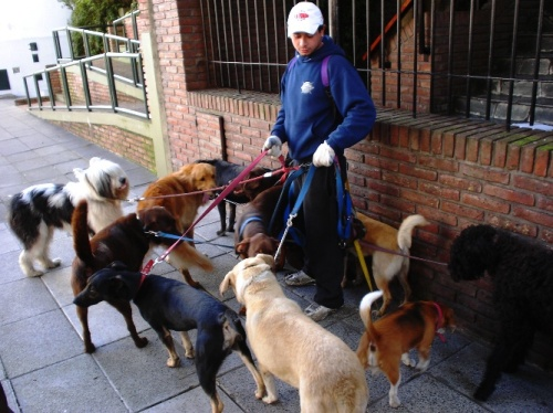 Walking Dogs, Dog Walker, Argentina, Buenos Aires, Walking ten dogs