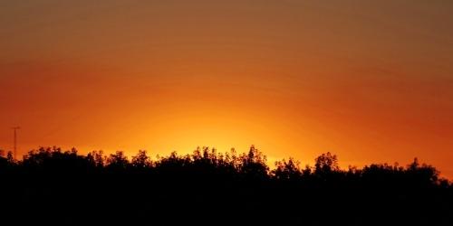 Orange sunset, Trees, Silhouettes, California Sunset