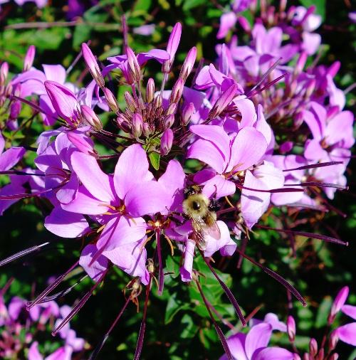 Purple Flowers, Flowers at the Zoo, Toronto Zoo, Indian Rhinoceros Pavillion, Bee on Flower