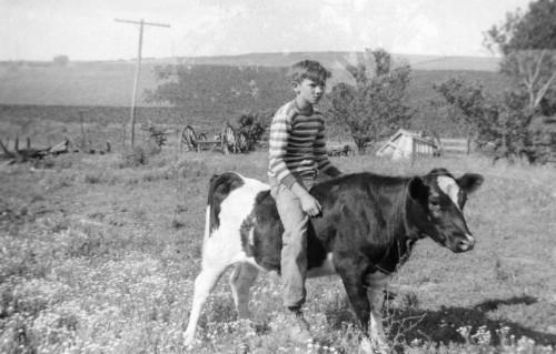Cow Riding, Fun on the Farm, 1950's Farm Scene