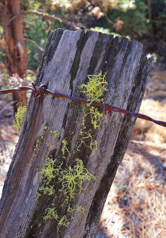 Mossy Post, Groveland, California, Foothills, Sierra Foothills
