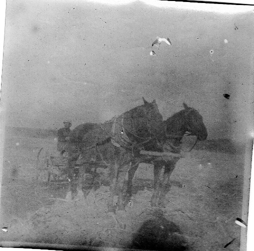 Horse Team, Cultivator, Old Farm Pictures, Old-Time Photography