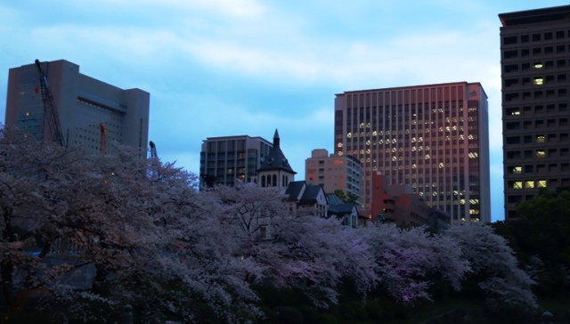 Cherry Blossoms, Tokyo, Moat, Cherry Blossoms at Sunset