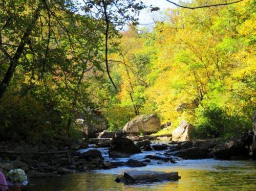 Richland Creek Wilderness Area, Fall Colors, Scenic Creek