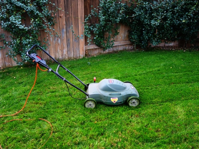 Electric Mower, Mowing the Yard, Lawn Care, Green Grass, Winter Grass