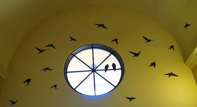 Birds in Transit, Migratory Birds, Tracy Transit Station, San Joaquin Valley, Tree Swallows