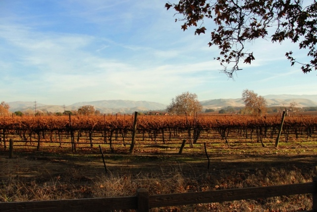 Colorful Vinyard, Livermore Hills, December color, Scenic Livermore