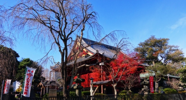 Ueno, Japan, Fall, Fall Color, Change of Seasons