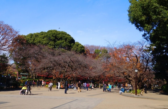 Cherry Trees in Fall, Ueno, Japan, Change in Seasons