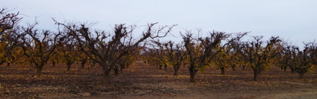 Orchard in fall, orchard in winter, Orchard Country