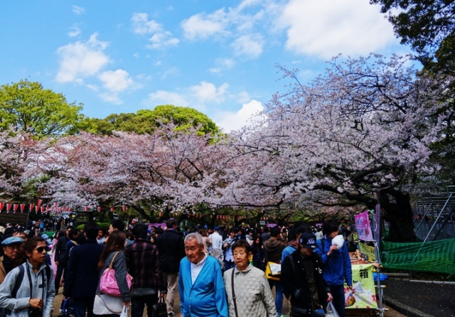 Cherry Blossoms, Ueno, Japan, Change of Seasons